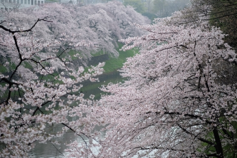 07千鳥ヶ淵の桜