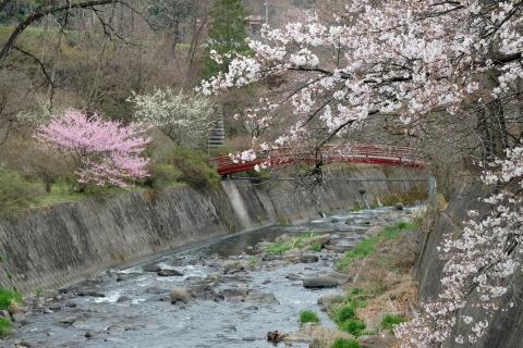 29中之条あたりの桜