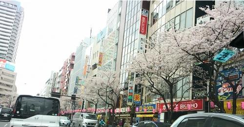 2016.4桜