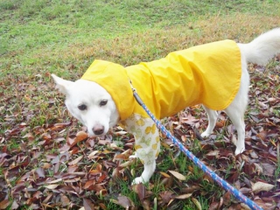 雨の日散歩 (2)