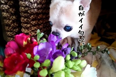 DSC_0608-3.jpg