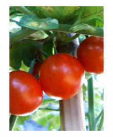 美音の健康レシピ <心+体+食+環>-tomato22