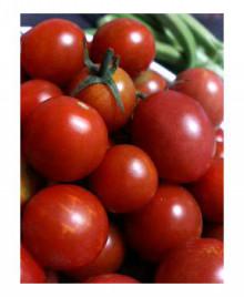 美音の健康レシピ <心+体+食+環>-tomato25
