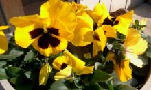 blog_import_570700604a6a3.jpg