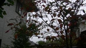 秋の庭01