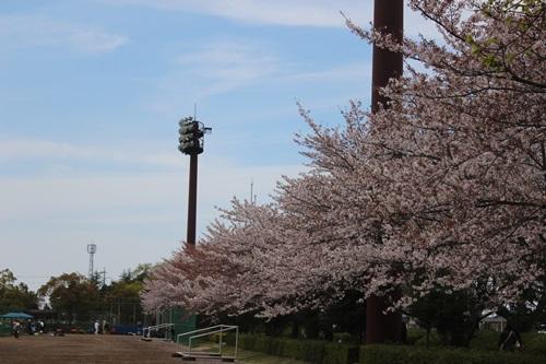 IMG_3848桜