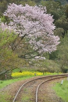 春色三江線(1)