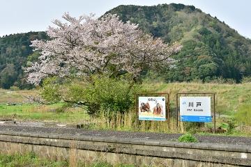 春色三江線(3)
