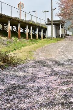 春色三江線(6)