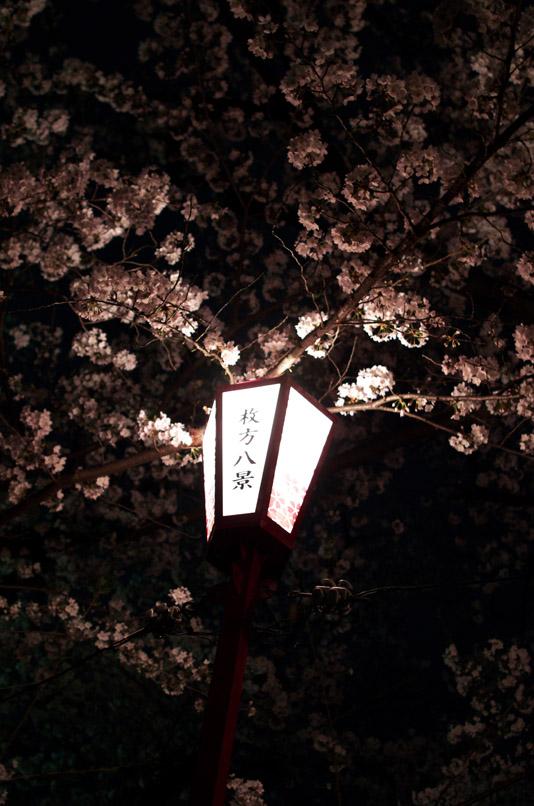 坂公園桜4min