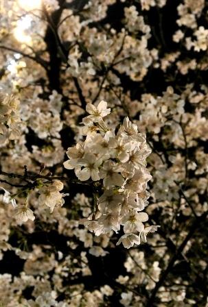 花見べんとうレッスン2016_6