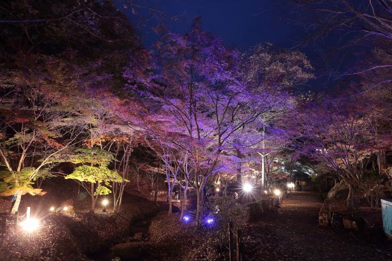 s151122紅葉夜景1