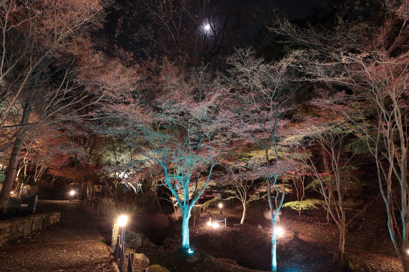 s151122紅葉夜景5
