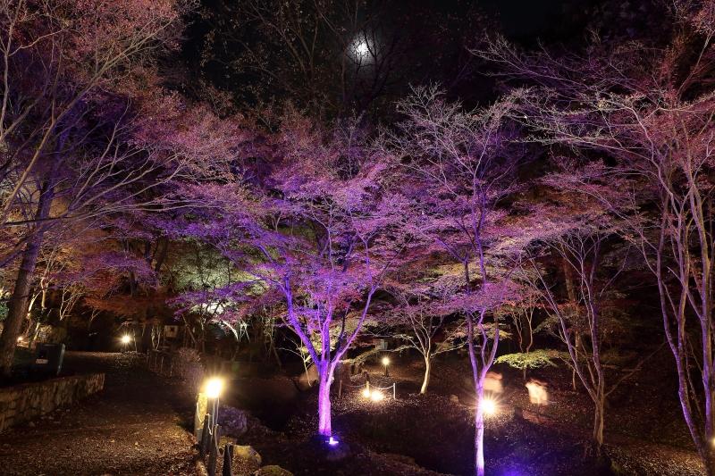 s151122紅葉夜景6