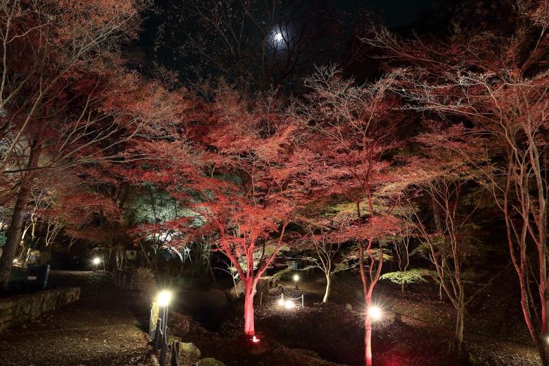 s151122紅葉夜景7