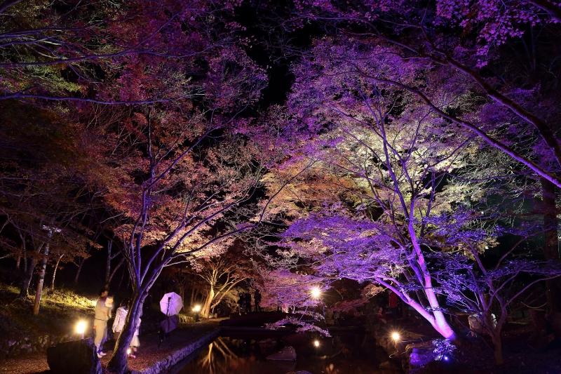 s151122紅葉夜景8