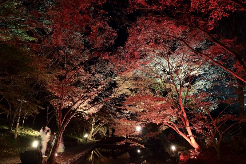 s151122紅葉夜景9