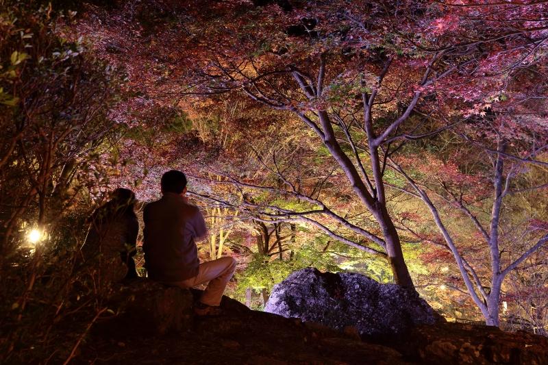 s151122紅葉夜景10