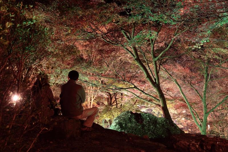 s151122紅葉夜景11