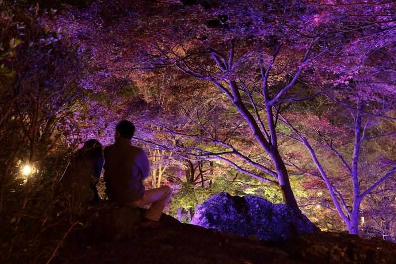 s151122紅葉夜景12