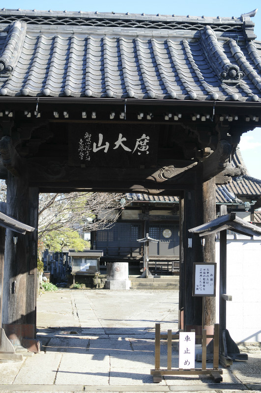 河津桜10