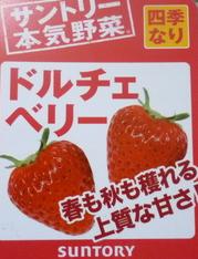 イチゴ(1)