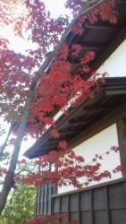 上野毛・帰真園の紅葉