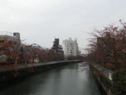 仙台堀川の桜並木・木更木橋から