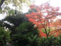 椿山荘 紅葉
