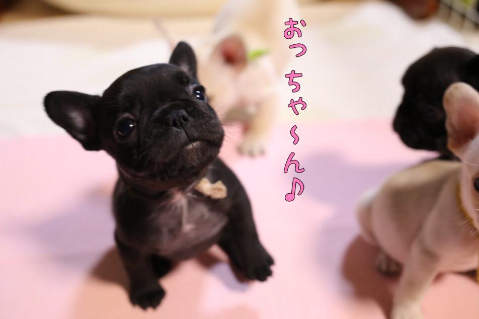 フレブル 子犬 ウィンク 1