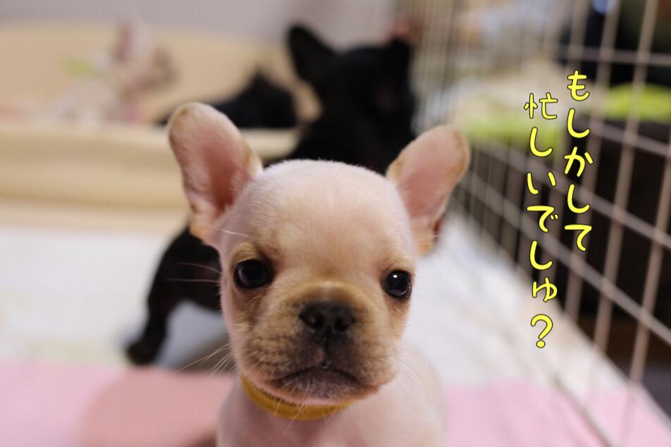 フレブル 子犬 ウィンク 3