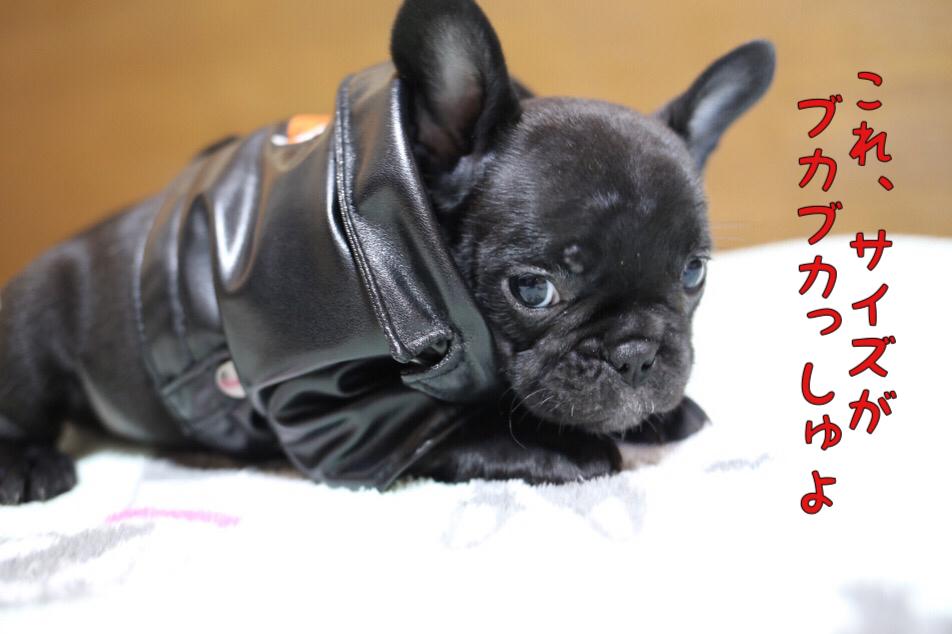 フレンチブルドッグ コスプレ 子犬 3