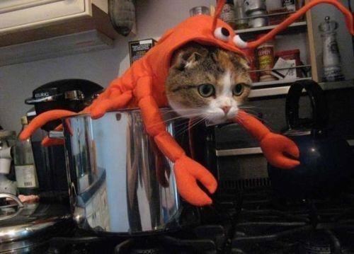 ロブスター猫