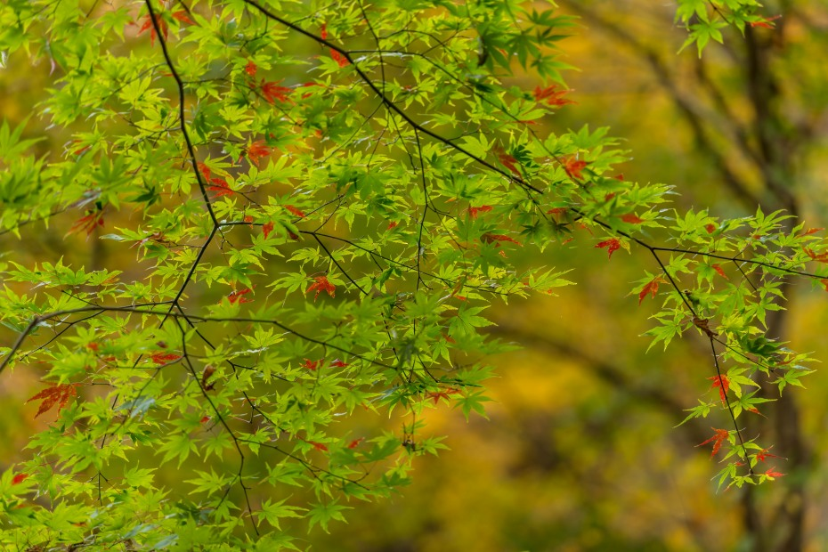 2015.10.19奥入瀬渓流銚子大滝周辺3