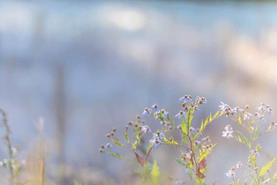 2015.10.23十和田湖の朝景13