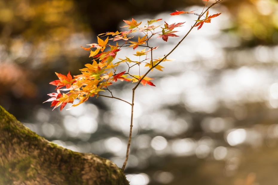 2015.10.23奥入瀬渓流の色彩9