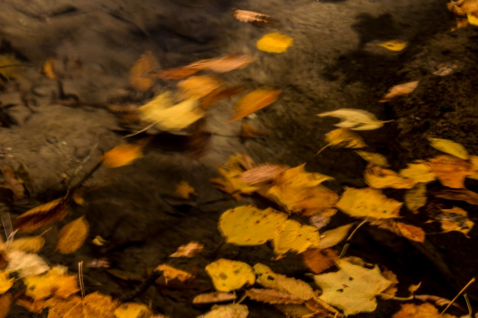 2015.10.23奥入瀬渓流の色彩10