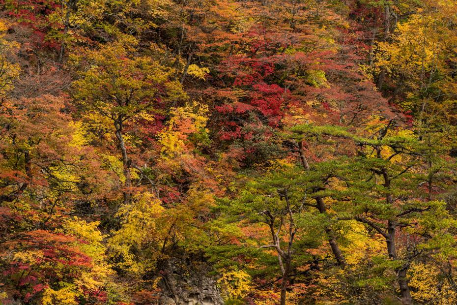 2015.10.25鳴子峡の紅葉16
