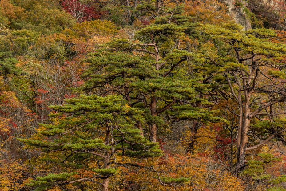 2015.10.25鳴子峡の紅葉12