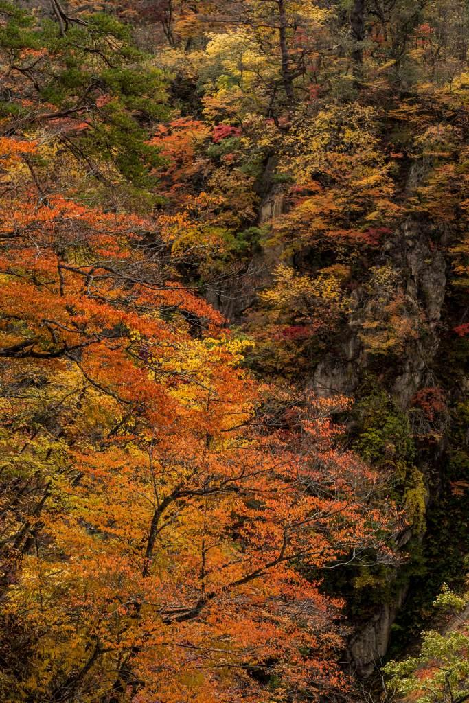 2015.10.25鳴子峡の紅葉9