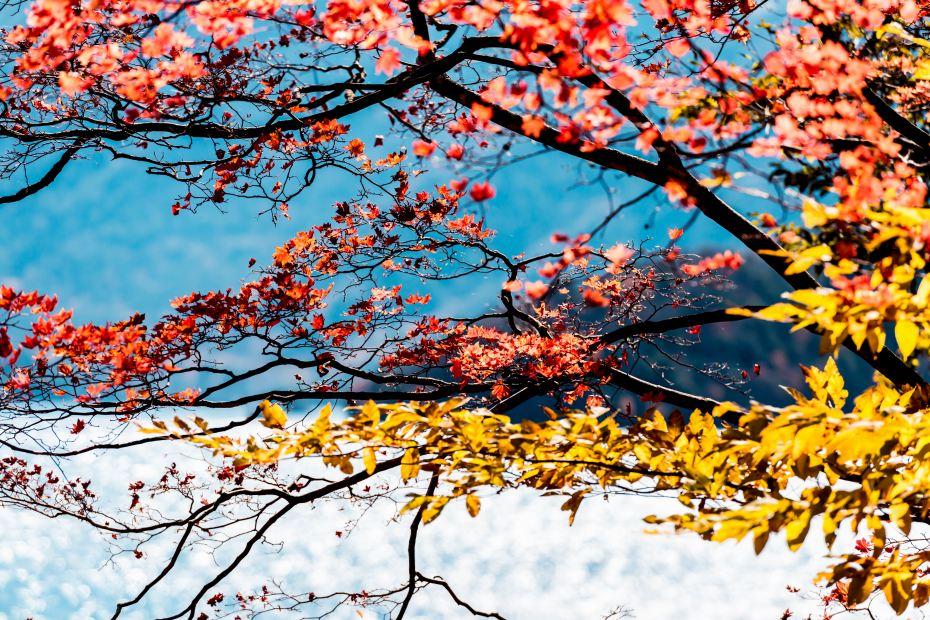 2015.10.27中禅寺湖周辺7