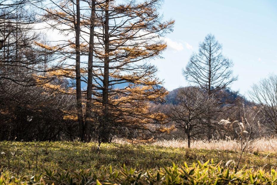 2015.10.28中禅寺湖周辺12
