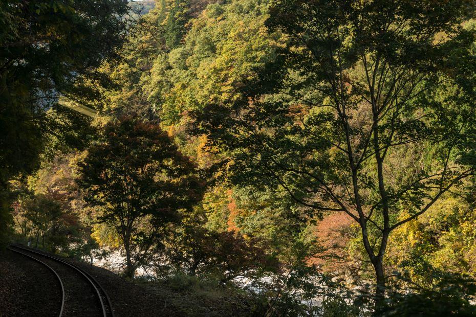 2015.10.30わたらせ渓谷鉄道7
