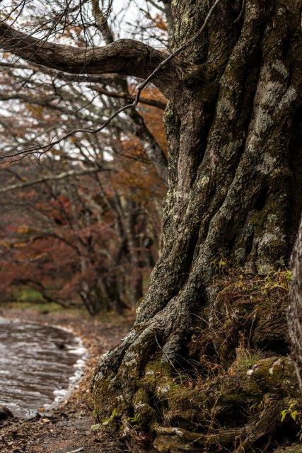 2015.10.31榛名湖を周回散策24