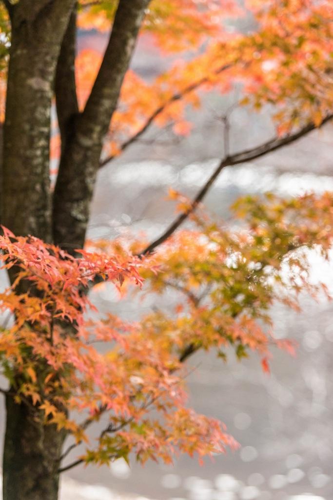 2015.10.31榛名湖を周回散策23