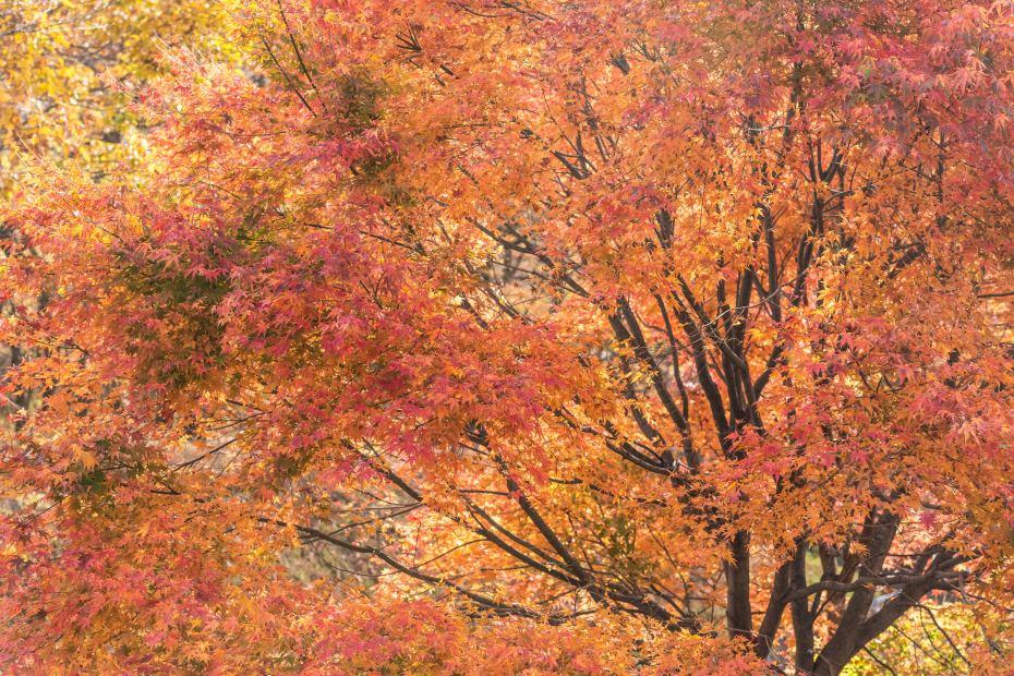 2015.10.31榛名湖を周回散策21