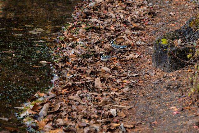 2015.10.31榛名湖を周回散策19