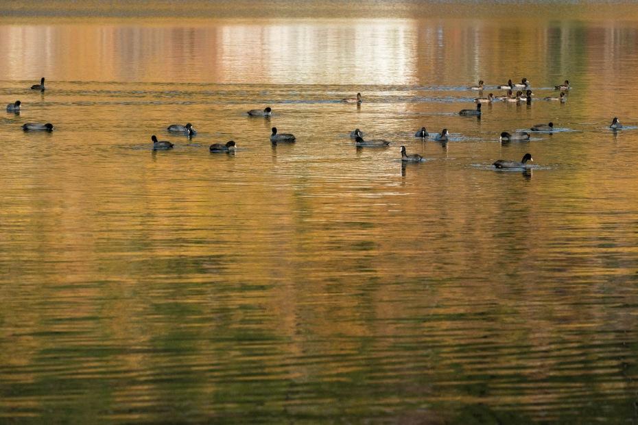 2015.10.31榛名湖を周回散策18