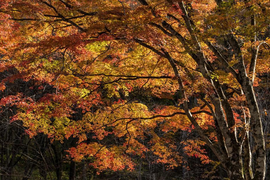 2015.10.31榛名湖を周回散策16