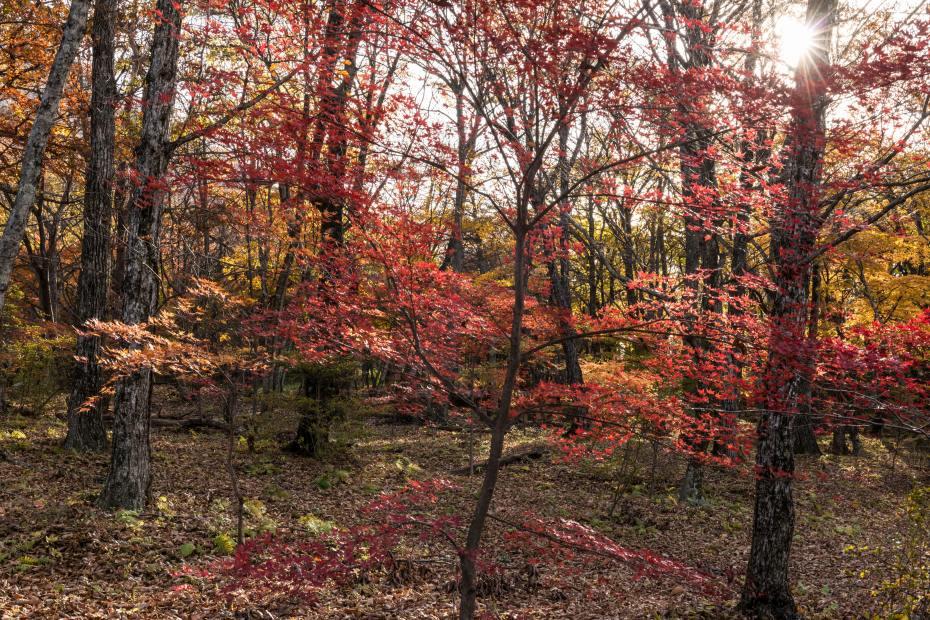 2015.10.31榛名湖を周回散策11